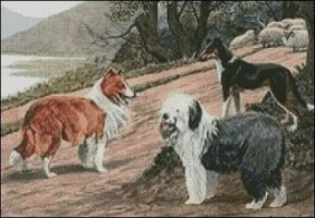 Collies and Sheepdog