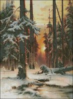 Winter Sunset in the Fir Forest